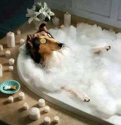 给狗狗做SPA的功效有哪些